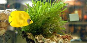 aquarium600_63364_tS2033